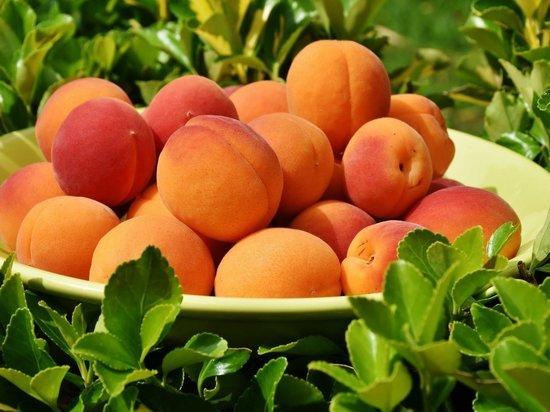 Диетолог рассказала, чем опасны абрикосы
