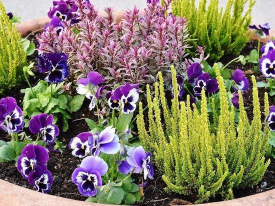 На цветочное оформление Казани потратят более 30 миллионов рублей