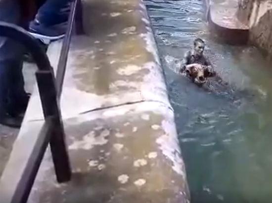 Нетрезвый поляк попытался утопить медведя в зоопарке