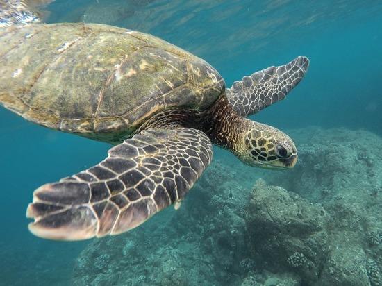 23 мая - Всемирный день черепахи!