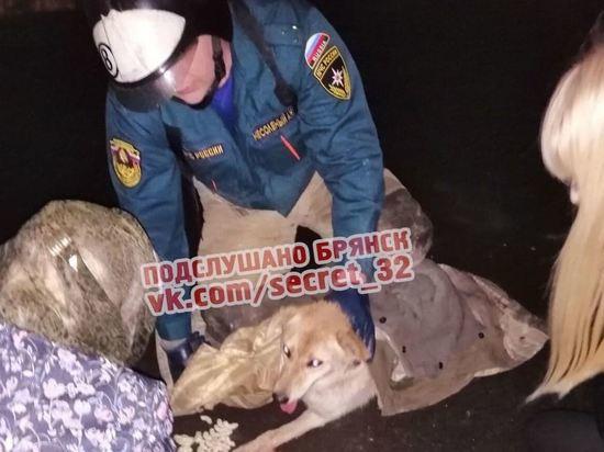 В Брянске спасли собаку, застрявшую на 16-м этаже стройки