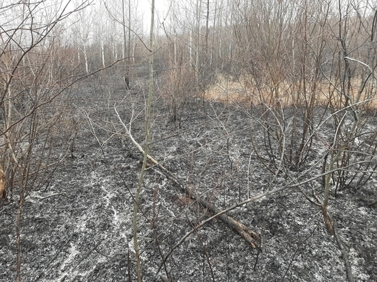 Более 2 тыс гектаров леса горит в Забайкалье