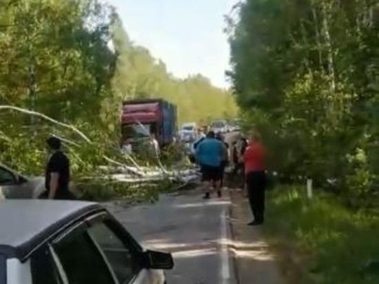 В Челябинской области ураган повалил деревья и оставил тысячи людей без света