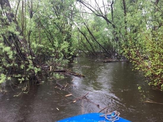 На свердловской реке погиб мужчина, пятеро спаслись на дереве