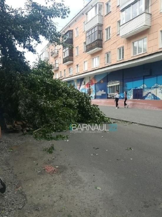 Шквалистый ветер в Барнауле обрушил дерево на машину с ребенком