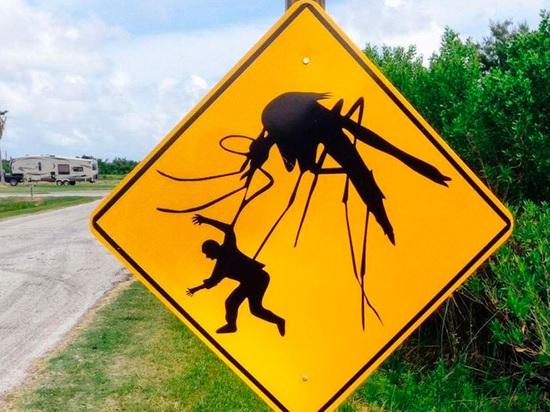 Как быстро снять зуд после комариного укуса
