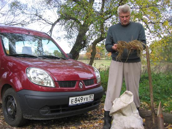 Профессор перечислил помогающие при коронавирусе травы