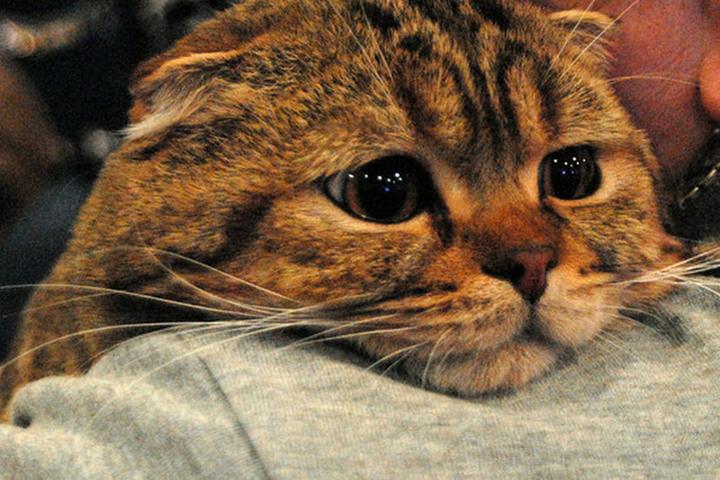 В Россельхознадзоре прокомментировали ситуацию вокруг московской кошки с COVID-19