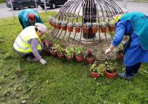 Сотрудники МБУ «Комбинат благоустройства» продолжают высаживать цветы на клумбах города