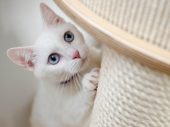 Ветеринар рассказал, как спасти кошку от коронавируса: изолировать заболевших людей