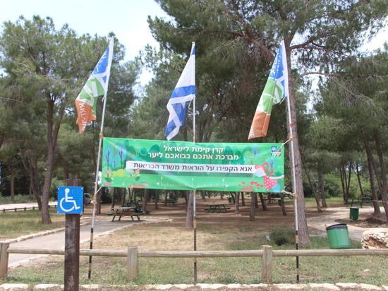 Всемирный день экологии: праздник в лесу и подарки от ЕНФ-ККЛ