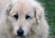 Зоозащитники Ямала будут голосовать за поправки в Конституцию об ответственном отношении к животным