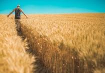 Псковским фермерам в минувшем году раздали 45 млн по гранту