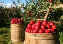 Специалисты назвали самый безынициативный в сельхозсфере район Псковской области