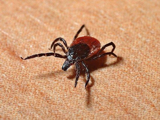В Рязанской области 74 человека пострадали от укусов клещей