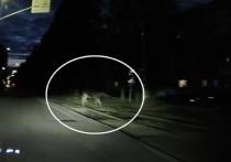 В Ярославле спасли раненого лося который гулял по улицам