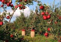 В Татарстане установили размер дохода от овощей со своего огорода