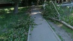 В Оренбурге сильный ветер валит деревья