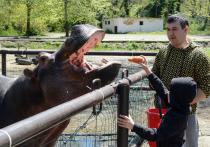 Как животные в Сочи проводят время в самоизоляции