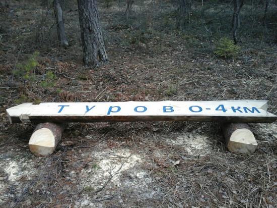 Лесники проявили поразительную фантазию при изготовлении скамеек