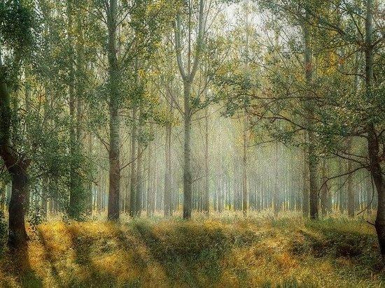 Посещать леса можно, но только очень осторожно
