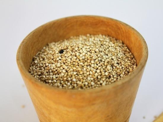 Что мешает выращивать на волгоградских полях «хлеб ацтеков»
