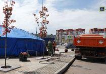 Два вида кленов высадили на Привокзальной площади в рамках программы по озеленению
