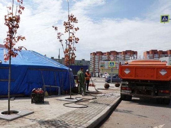 На привокзальной площади в Серпухове высадили клены
