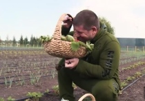 Кадыров показал свой огромный огород в Чечне