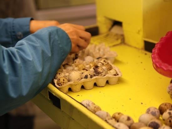 Серпуховская птицефабрика получила государственную поддержку