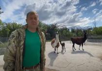 В крымском зоопарке родился детеныш ламы