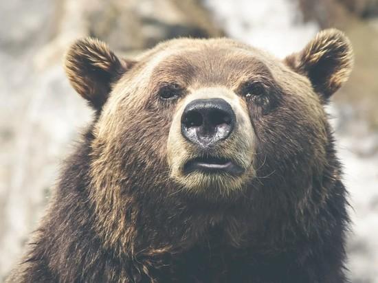 В Казахстане медведица задрала россиянина
