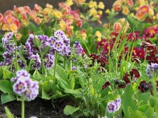 Город Пущино украсили цветами