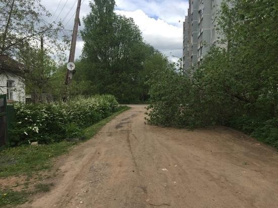 В Тверской области упавшее дерево два дня лежит на дороге