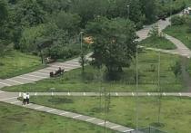 В московских парках появилась новая разметка для социального дистанцирования