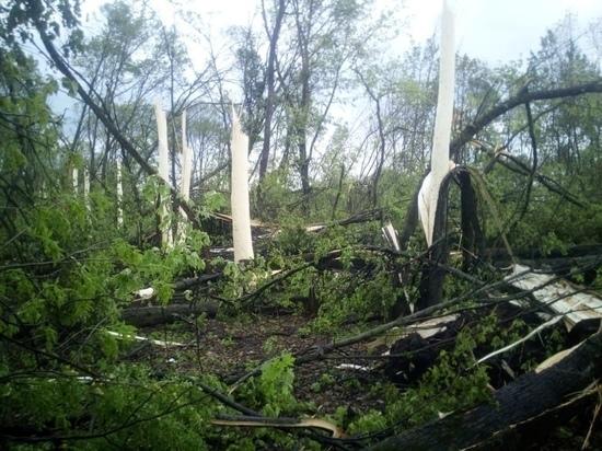 Под Орлом наблюдают необычное природное явление: деревья сбросили кору