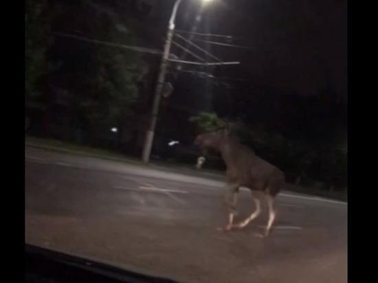 31 мая ночью, около 1.30, сразу несколько человек увидели лося, передвигающегося по улицам Владимира
