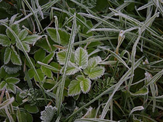 Заморозки на почве ожидаются в Удмуртии к середине недели