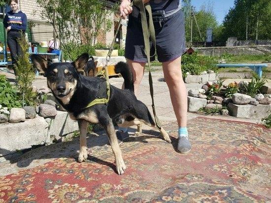 Псковские зоозащитники приютили собаку, хозяина которой экстренно увезли на