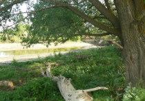 Экологическая катастрофа под Саратовом: речка обмелела из-за повреждения плотины, мёртвые бобры исчезли