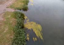 В реках Оренбуржья можно будет плавать