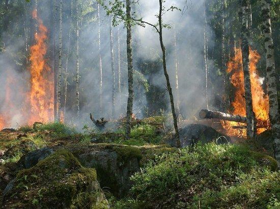 На юге ЯНАО ожидается повышенная вероятность возгорания лесов в июне