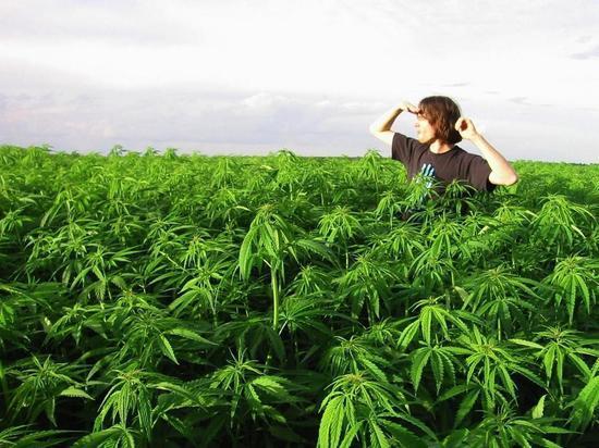 Конопля в черноземье семена марихуаны ак 48