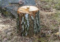 Костромич хотел заработать на продаже леса, а попал на деньги — и еще остался доволен