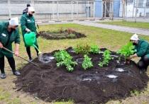 В Тамбовской области озеленили СИЗО