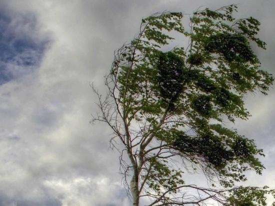 3 и 4 июня в ЦФО и Тверской областибудет дуть сильный ветер и идти продолжительные дожди