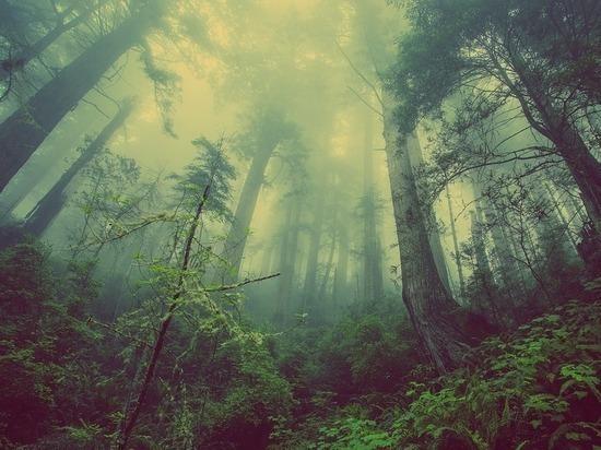 В лесах Ивановской области с «черными лесорубами» борются «оборотни в погонах»