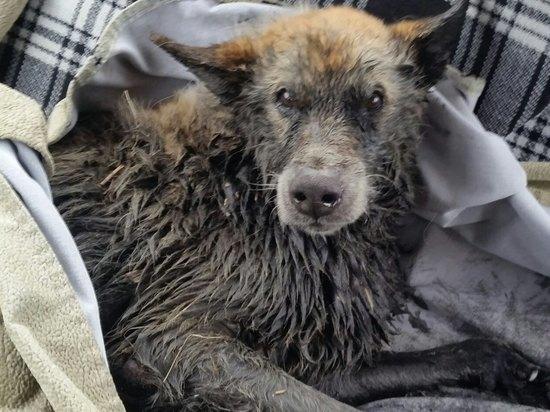 В Пскове сотрудники Горводоканала спасли пса, несколько дней пролежавшего в канаве