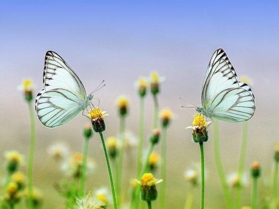 Ученые бьют тревогу: исчезают сухопутные насекомые, особенно бабочки