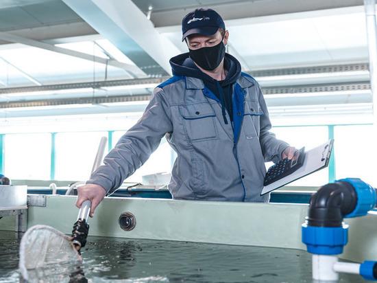 «Газпромнефть-Ямал» выпустит в реки ЯНАО молодь муксуна и чира